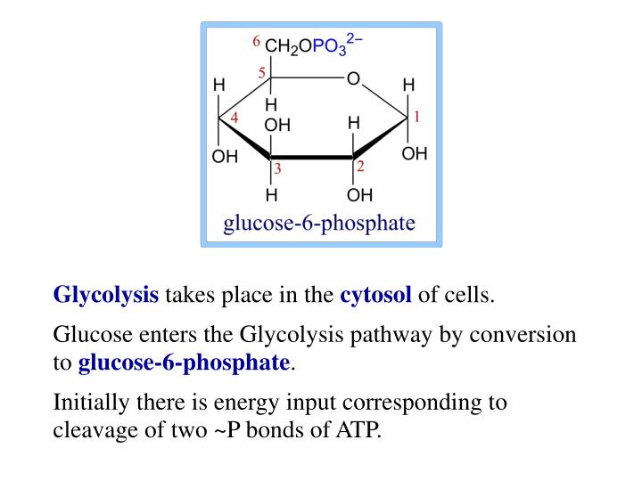 Glycolysis and the Regulation of Blood Glucose