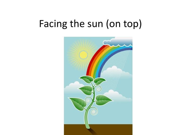 Facing the sun (on top)