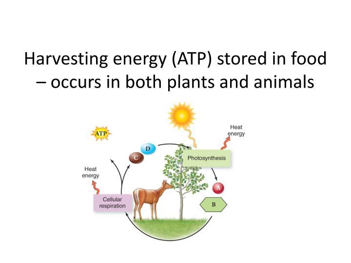 Harvesting energy (ATP)