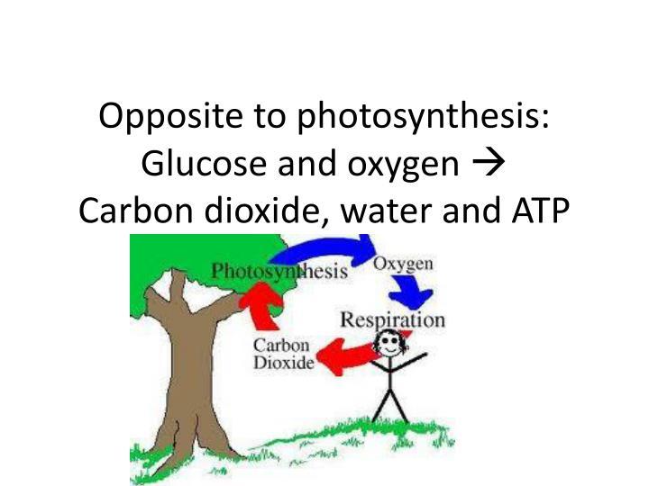 Opposite to photosynthesis: