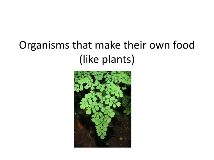 Organisms that make their own food like plants
