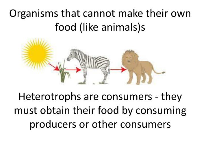 Organisms that cannot make their own food (like animals)s