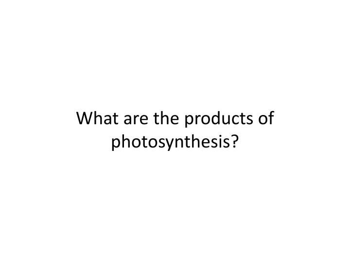 What are the products of photosynthesis?