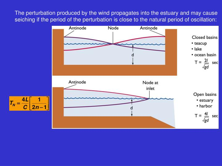 The perturbation produced by the wind propagates into the estuary and may cause seiching if the period of the perturbation is close to the natural period of oscillation: