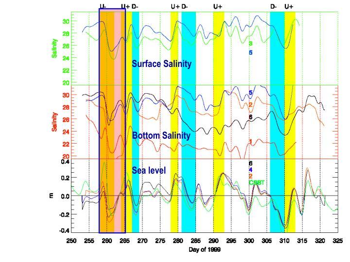 Surface Salinity
