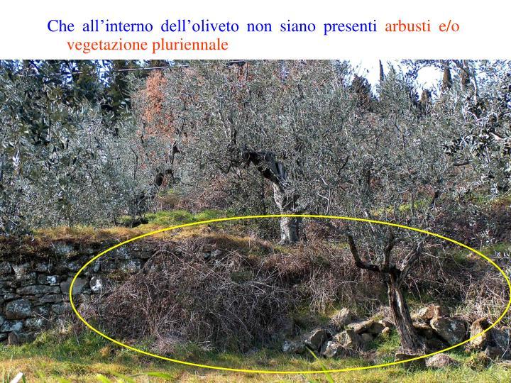 Che all'interno dell'oliveto non siano presenti