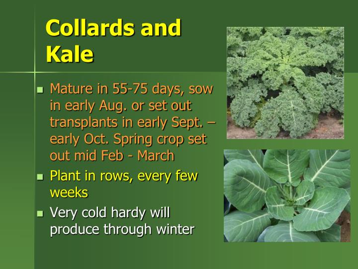 Collards and