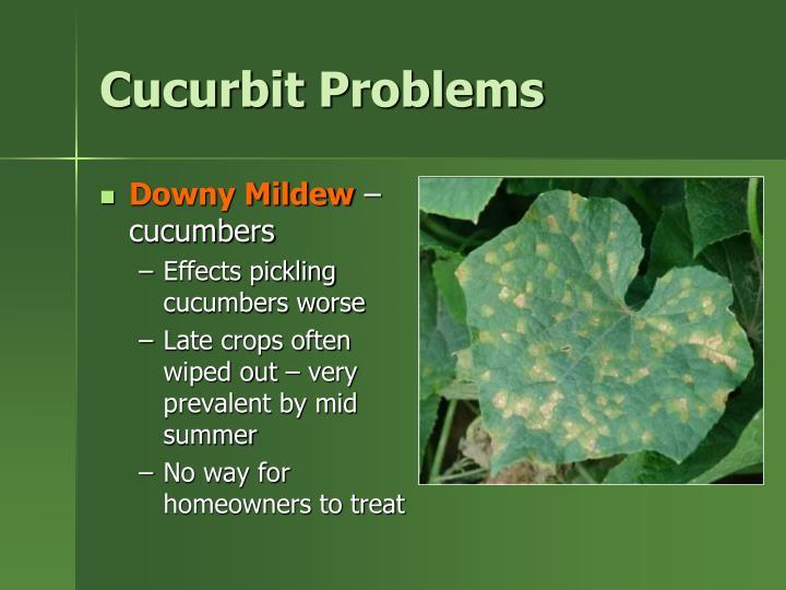 Cucurbit Problems