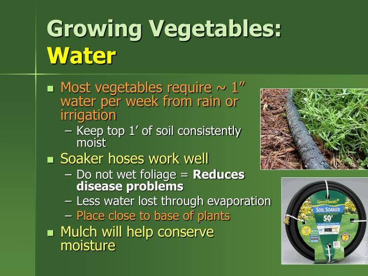 Growing Vegetables: