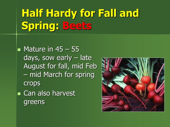 Half Hardy for Fall and Spring: