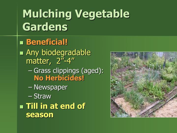 Mulching Vegetable Gardens