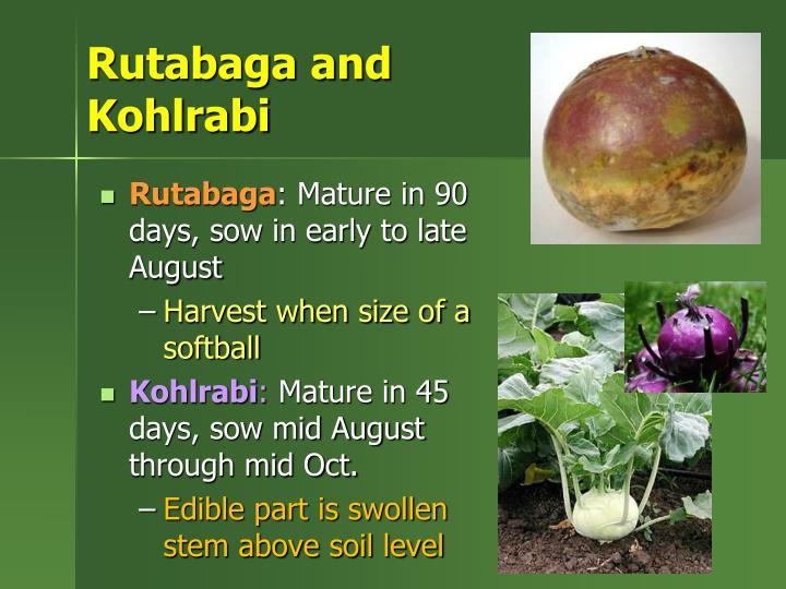 Rutabaga and