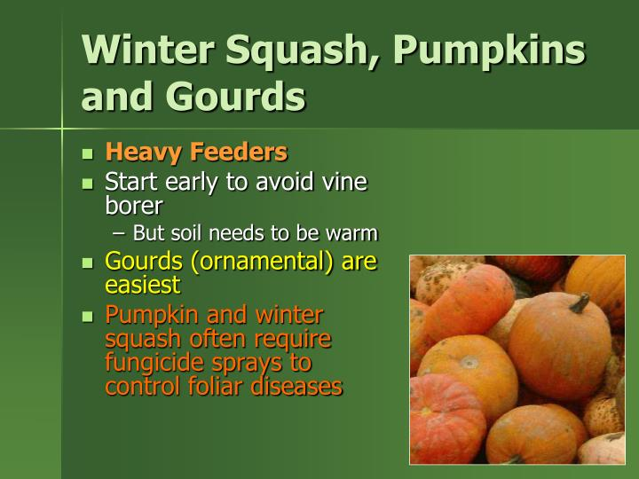 Winter Squash, Pumpkins and Gourds