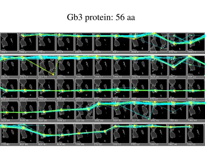 Gb3 protein: 56 aa