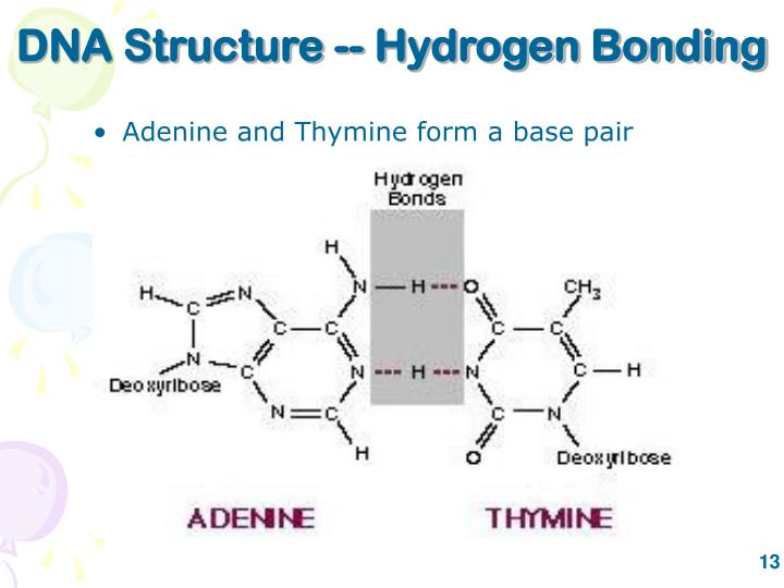 DNA Structure -- Hydrogen Bonding