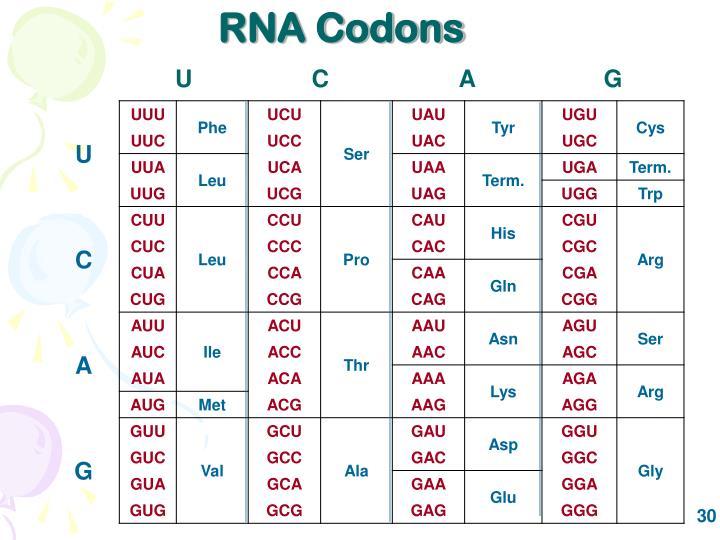 RNA Codons