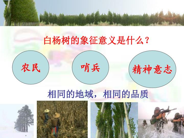 白杨树的象征意义是什么?