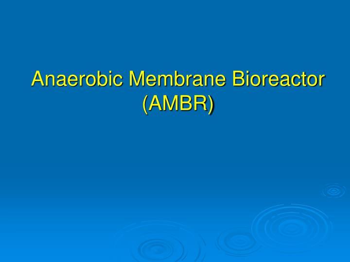 Anaerobic Membrane Bioreactor (AMBR)