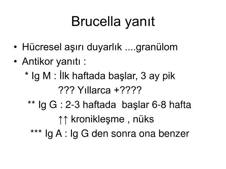 Brucella yanıt