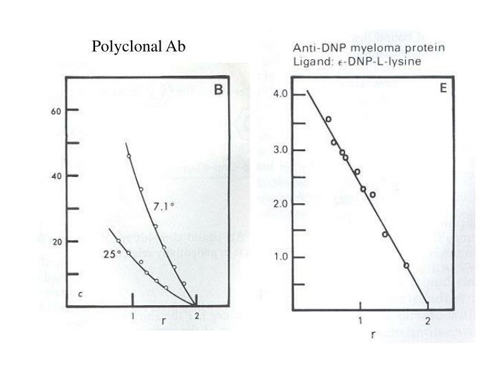 Polyclonal Ab