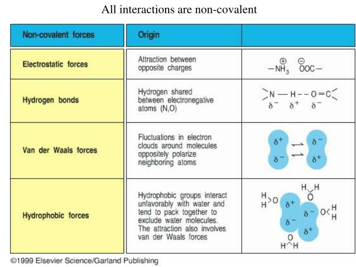 All interactions are non-covalent