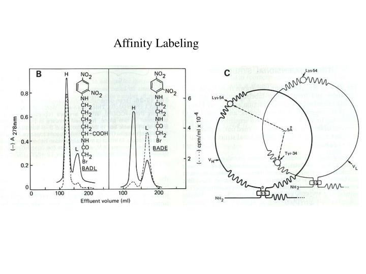 Affinity Labeling