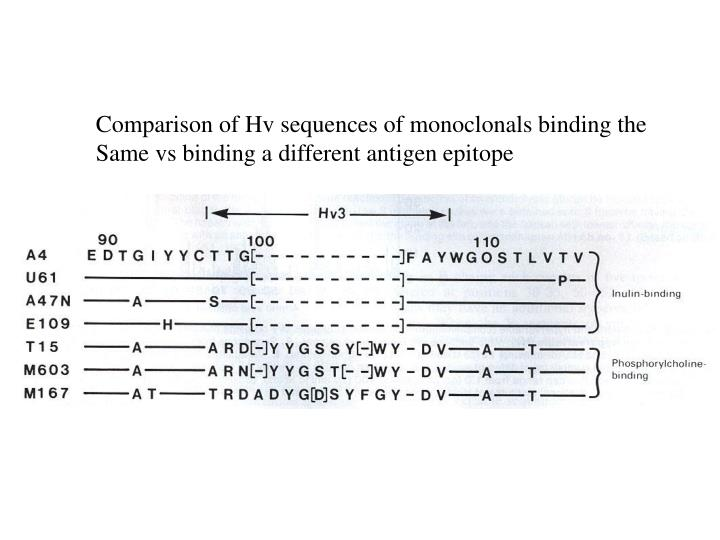 Comparison of Hv sequences of monoclonals binding the