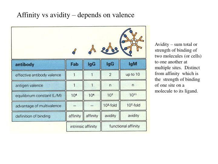 Affinity vs avidity – depends on valence