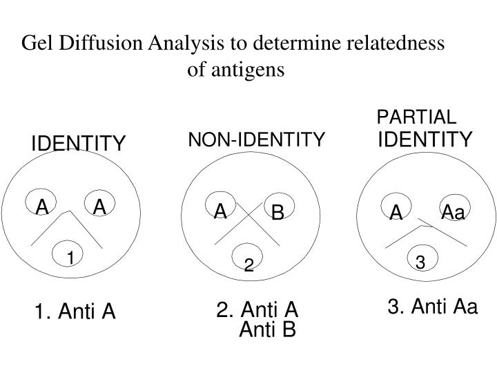 Gel Diffusion Analysis to determine relatedness