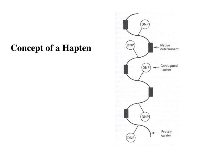 Concept of a Hapten