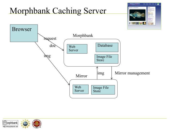 Morphbank Caching Server