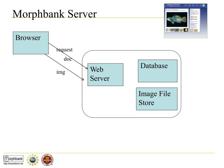Morphbank Server
