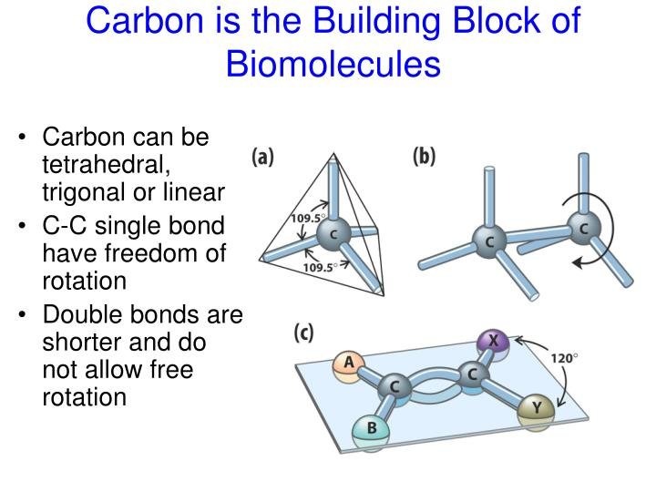 Carbon is the Building Block of Biomolecules
