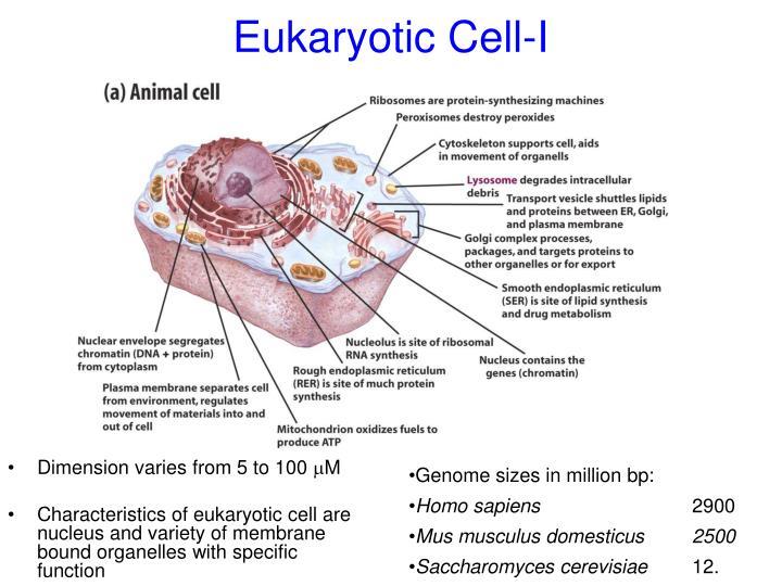 Eukaryotic Cell-I