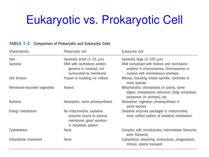 Eukaryotic vs. Prokaryotic Cell
