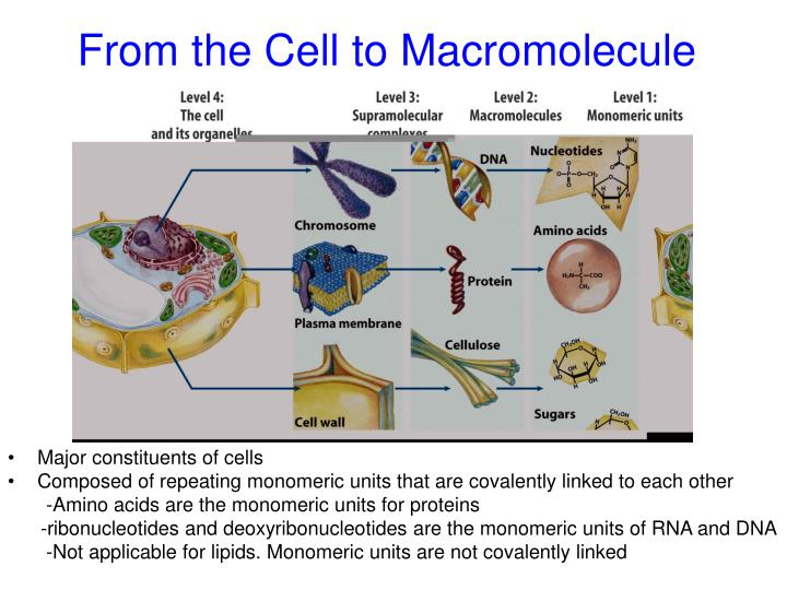 From the Cell to Macromolecule