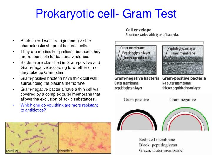 Prokaryotic cell- Gram Test