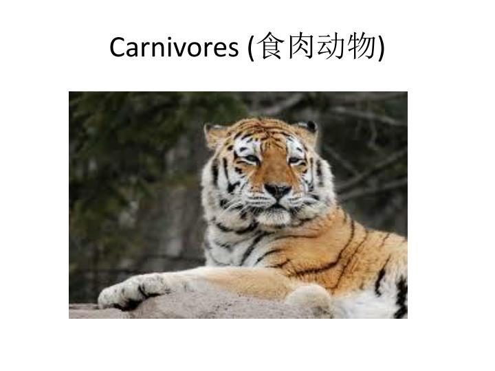 Carnivores (