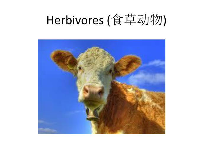 Herbivores (