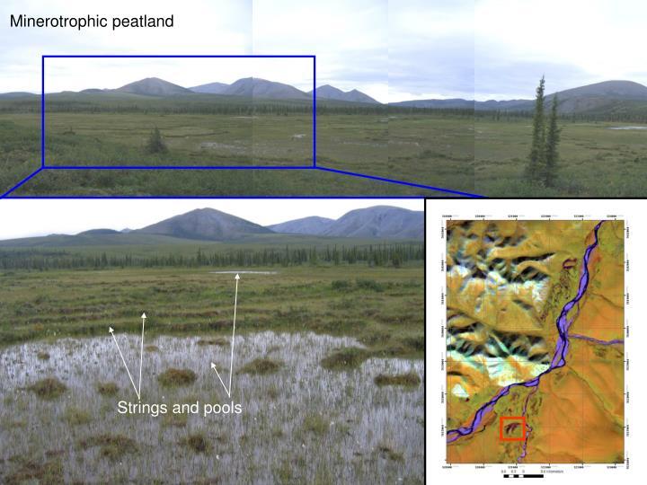 Minerotrophic peatland
