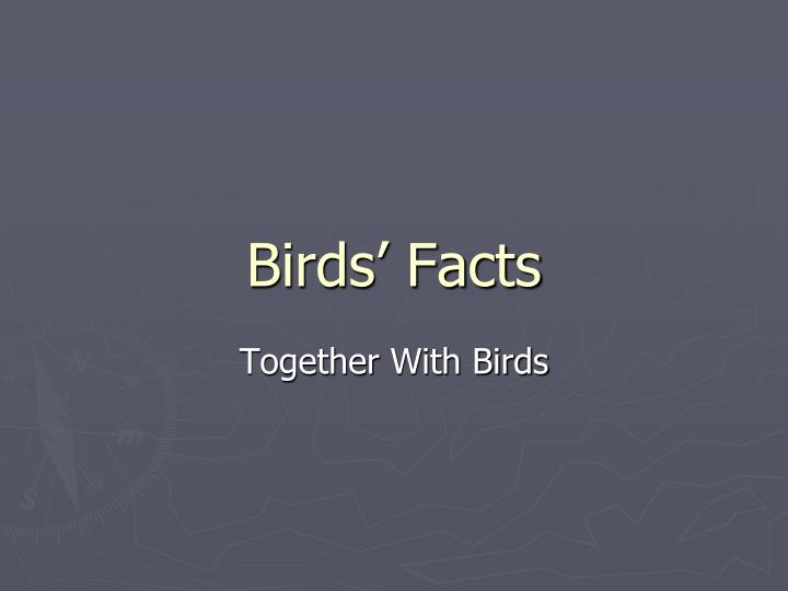 Birds facts