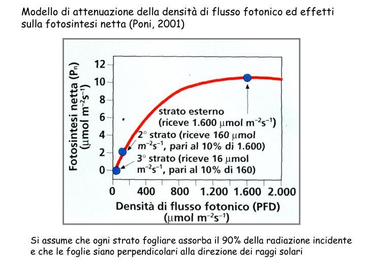 Modello di attenuazione della densità di flusso fotonico ed effetti