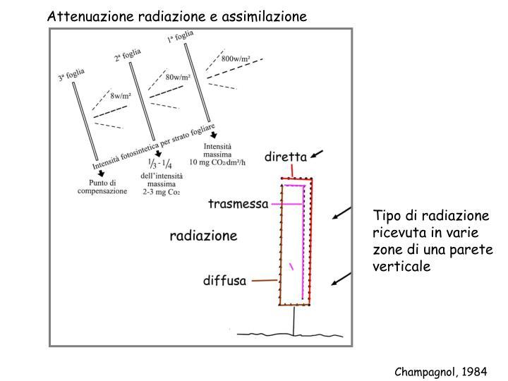 Attenuazione radiazione e assimilazione