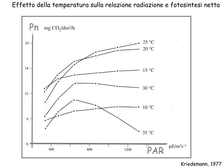 Effetto della temperatura sulla relazione radiazione e fotosintesi netta