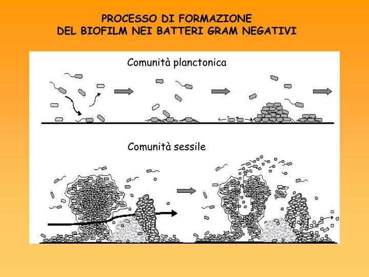 Comunità planctonica