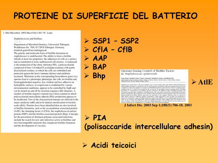 1: Mol Microbiol. 2002 Mar;43(6):1367-78.