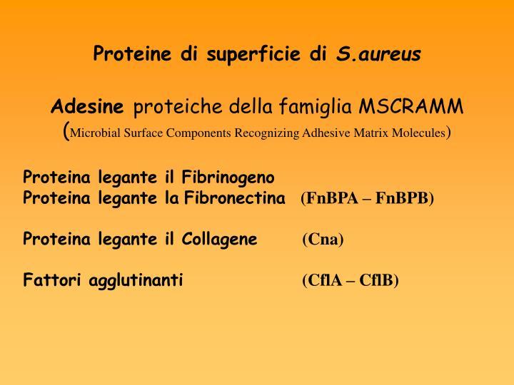 Proteine di superficie di