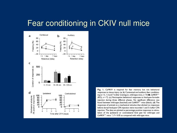 Fear conditioning in CKIV null mice