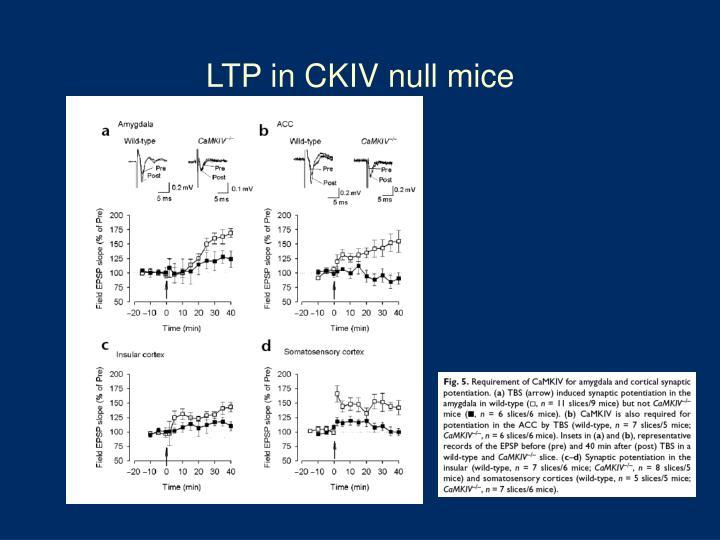 LTP in CKIV null mice
