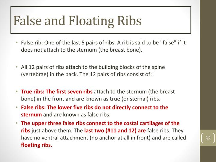 False and Floating Ribs